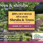 Sale on Shrubs and Trees at Tudbink's