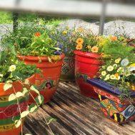 bg-orangepots