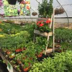 veggies-herbs-mints2