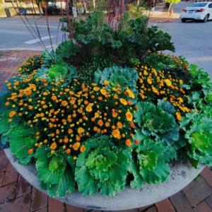 fall-planter-1