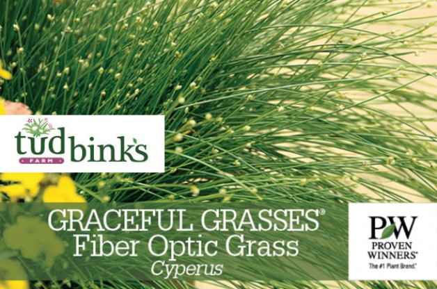 Fun Grasses! Fiber Optic Grass