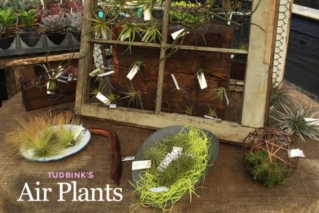 Tudbink's Air Plants