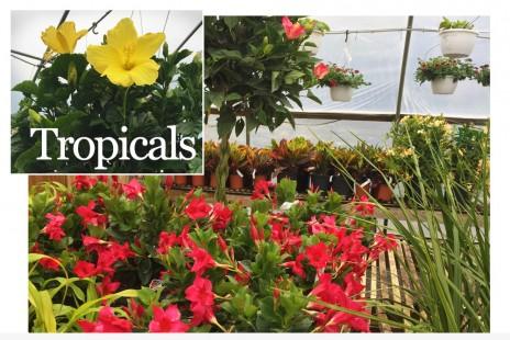 Tropicals are Here!