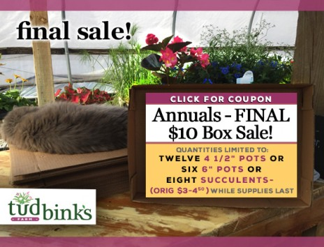 Tudbink's FINAL $10 Box of ANNUALS Sale!
