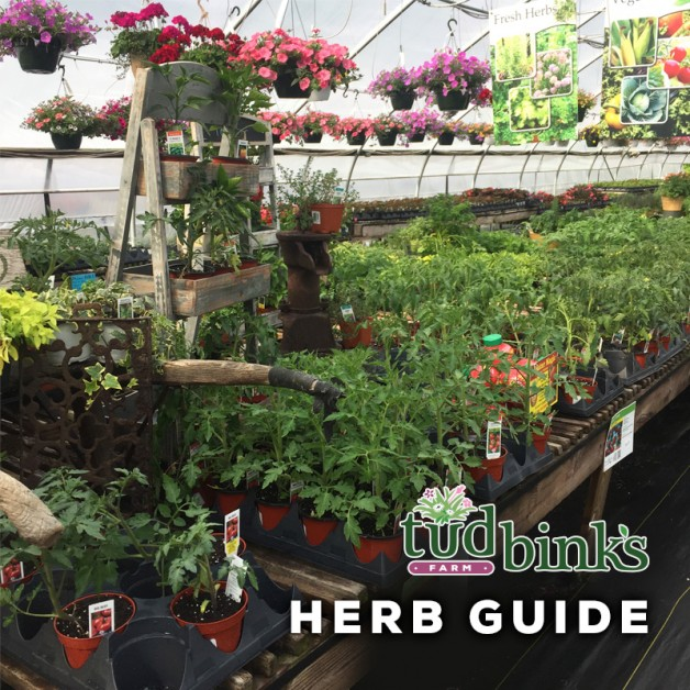 Herb Care Guide