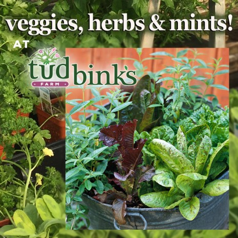 Veggies, herbs and mints!