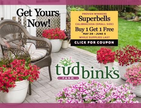 Superbells/Calibrachoa Buy 1 Get 1 Free!