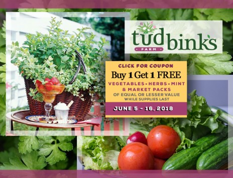 Buy one vegetable or herb or mint and get one free!