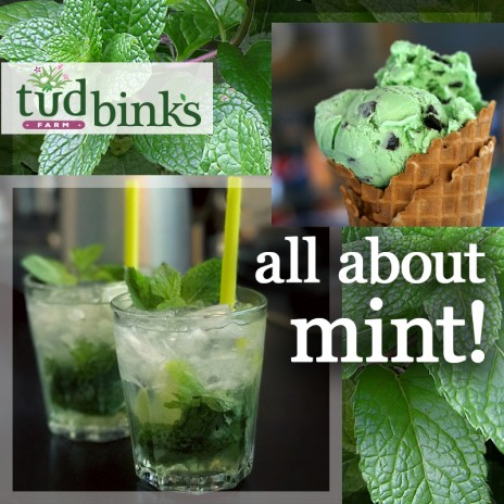 What's not to love about mint?