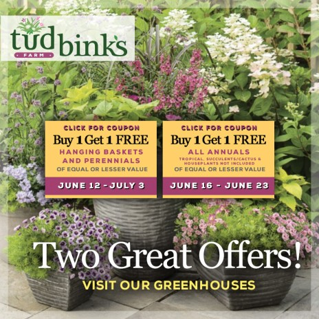 Two Great Offers – Buy one and get one free!