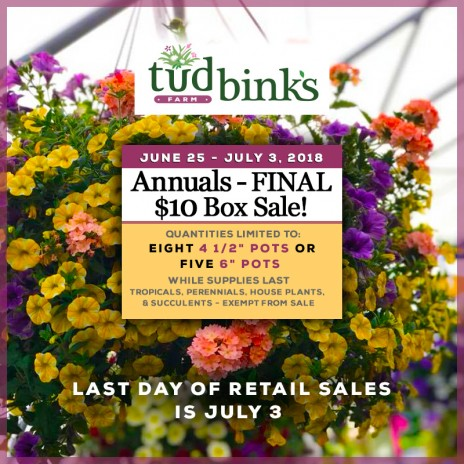 Tudbink's $10 Box of ANNUALS Final Sale!