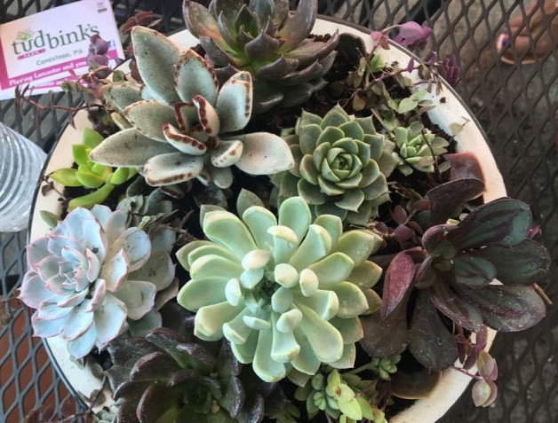 Succulent Workshop