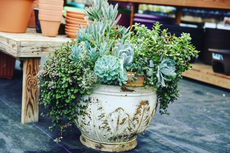 Winter Workshop: Succulents and Houseplants