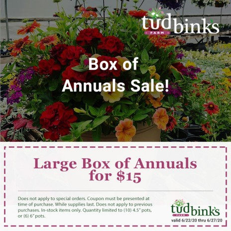 Box of Annuals Sale