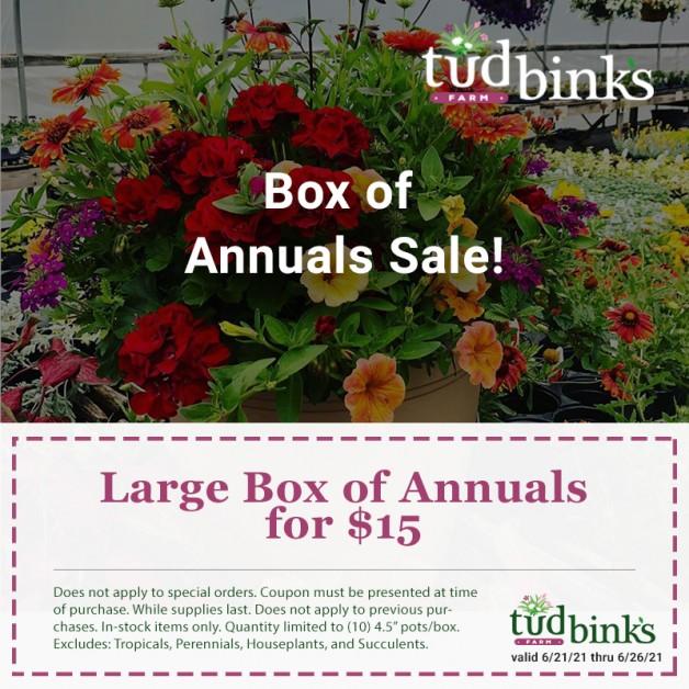 Box of Annuals Sale
